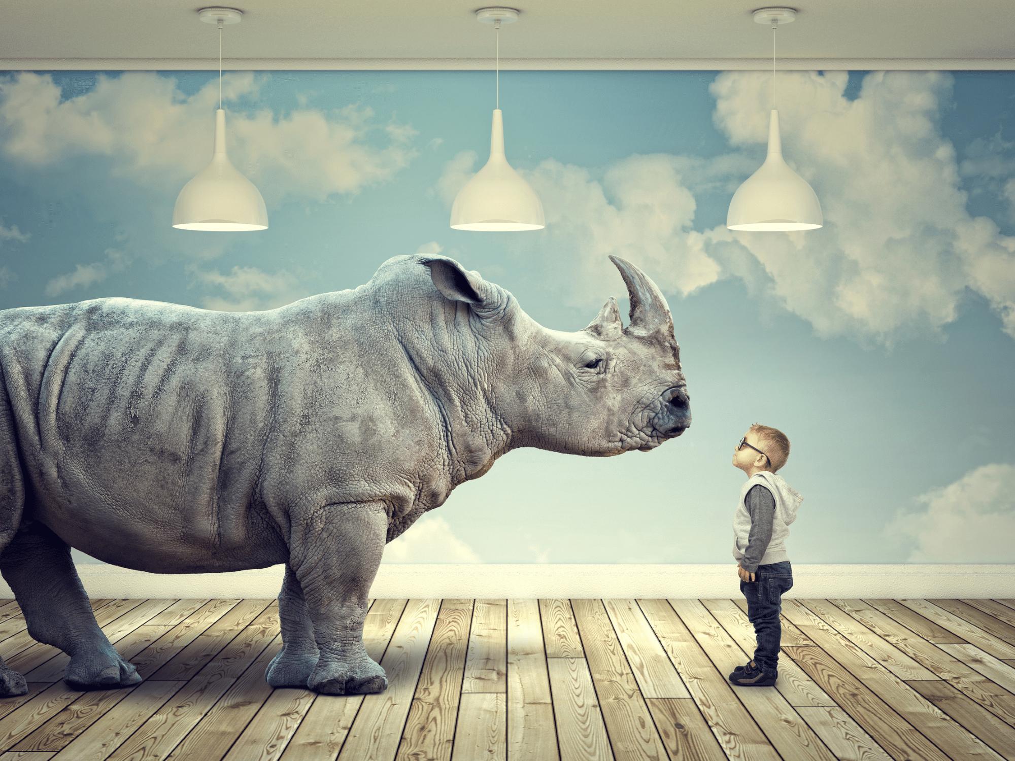 Petit garçon face à un rhinocéros